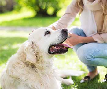 Emotional support animals are able to attend select colleges with their owners, as schools are re-evaluating their campus policies when it comes to accommodating students with mental-health issues. Higher education institutions are also debating whether suicide-prone students should be given campus leave, in order to recover. Administrators are fighting to make decisions in the best interest of all students meanwhile discerning the troubled adolescent from a homesick student who just really wants a puppy.