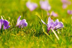 Spring has officially begun! Days are getting longer and the weather is getting warmer. Spring means flowers and rainstorms. It's also the time that brings college acceptances and decisions! That's why spring is a great time to apply for scholarships. These April scholarship opportunities will springboard you to college savings! Check out the following scholarships, and be sure to try a free scholarship search today to discover customized scholarship results that can help you pay for college.